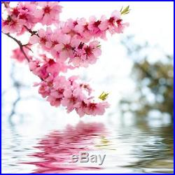 10Pcs Beautiful Japanese Sakura Flower Cherry Bonsai Tree Rare Garden Seeds