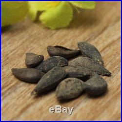 10Pcs Rare Baby Ginseng Fruit Pear Tree Seeds NON GMO Sapodilla Garden Plant