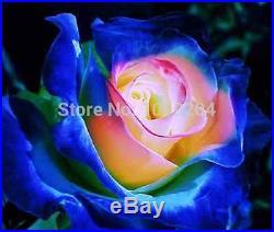 200 PCS rare Japanese Smurfs rose seed, bonsai flower seeds