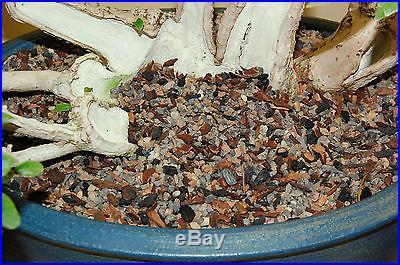 BONSAI SOIL PREMIUM THRIVE MIX BLEND 15 QUARTZ 3.75 GALLONS