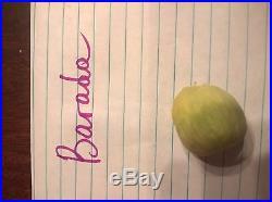 Barada 2 rare fresh fig cuttings, the BEST