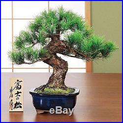Bonsai Pine Matsu Replica Handmade in Realistic Artificial imitation #EMS Japan