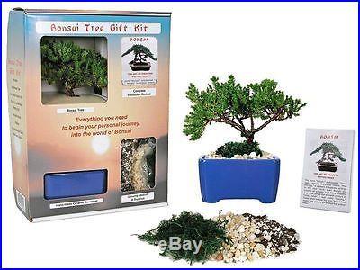 Bonsai Tree Gift Kit plus Live Japanese Juniper Tree