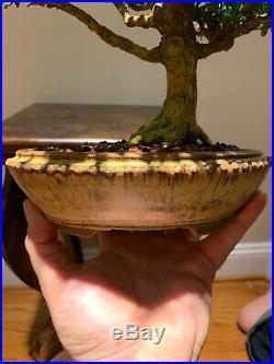 Boxwood Bonsai Pot By Sara Rayner