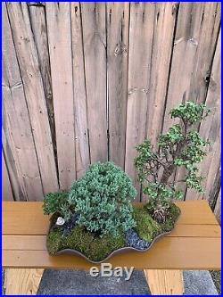 Custom Live Bonsai Tree Forest Pot Jade Juniper Carissa Moss Live Rocks Art