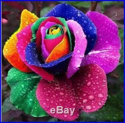 Garden plants 150 Beautiful Rainbow Rose Seeds Multi-colored Rose seed