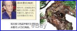 Hand craft Bonsai Replica Mt. Fuji Pine tree Matsu Good fortune SuzukiToyoha 989