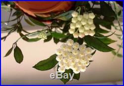 Hoya Lacunosa Ruby Sue- Live Plant in a 8 Pot