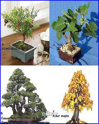 Huge Bonsai Pack 12 Types oF Trees Over 110+ Seeds! Rare + Growing Instruction