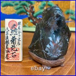 JAPANESE BONSAI SUISEKI Chrysanthemum Stone 907040mm 268g #S62