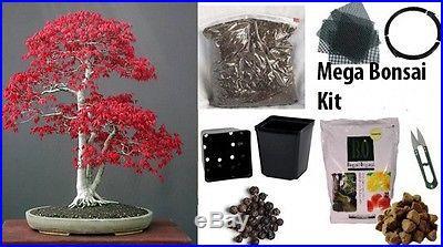 Japanese Maple Bonsai Kit MEGA KIT- Soil/Pots/Seeds/Wire/Fertilzer/Mesh/Tweezers