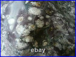 Japanese Suiseki Bonsai Chrysanthemum Stone Mountain 35 × 17 × 25 cm Japan FedEx
