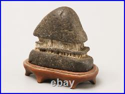 Japanese Vintage Suiseki Bonsai KUZUYA Stone / W 5.7× H 5.9cm, 73g