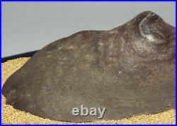 Japanese Vintage Suiseki Fujigawa River Stone / W30×H 7.5cm, 3355g
