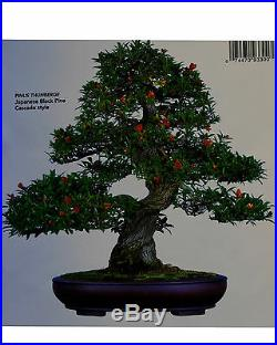 Japanese fruiting, flowering twisted pomegranate specimen # 105