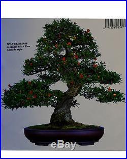 Japanese fruiting, flowering twisted pomegranate specimen # 120