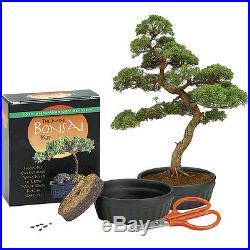 NEW The Mini Tabletop Traditional Bonsai Tree and Pot Living Art Grow Kit