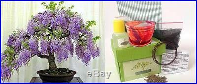 Premium Bonsai Kit in Gift Box (Wisteria Tree)-8Pieces, Includes CERAMIC Pot
