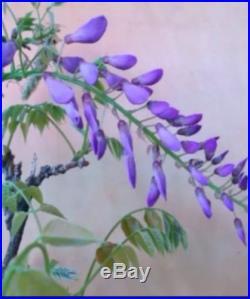 Purple Japanese Wisteria Flowering Pre Bonsai Semi Cascade Nice Buttress