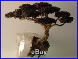 RICHARD BELL-SMITH, signed- Quartz Amethyst Bronze Copper Bonsai Tree Garden