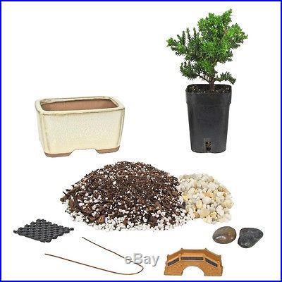 UNIQUE BONSAI Tree Starter Kit Mini 4 PERFECT GIFT eBay Special